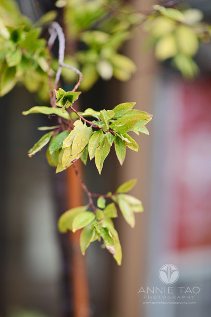 East-Bay-lifestyle-photography-branch-with-raindrops