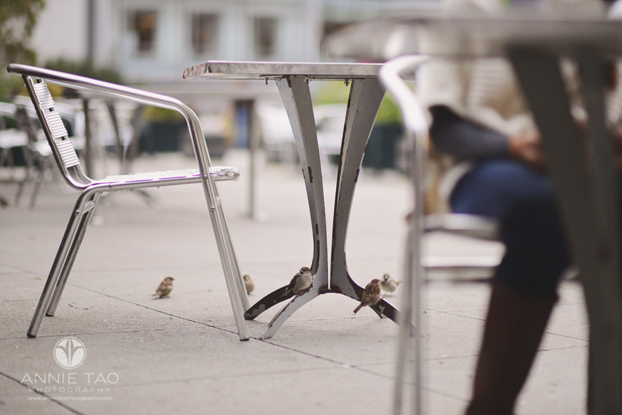 san-francisco-lifestyle-photography-small-birds-sneaking-up-to-the-table