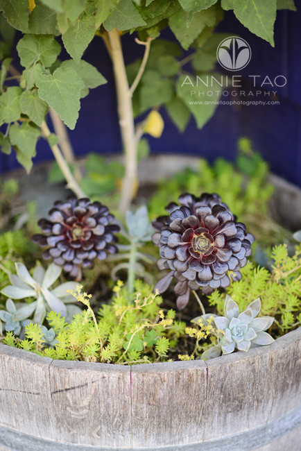 San-Francisco-lifestyle-photography-potted-plants