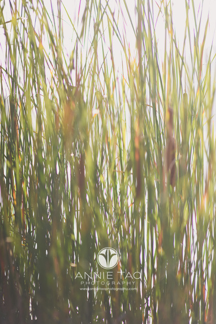 Bay-Area-lifestyle-photography-long-grass-at-lake