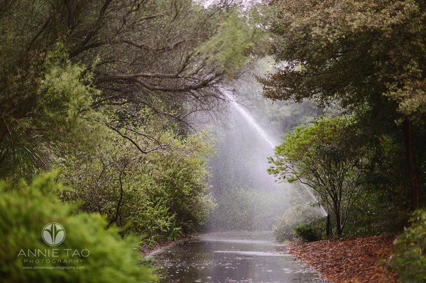 san-francisco-lifestyle-photography-big-sprinkler