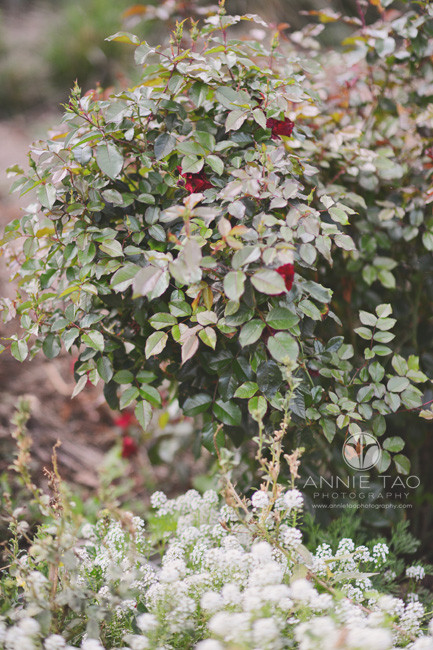 east-bay-lifestyle-photography-floral-bushes