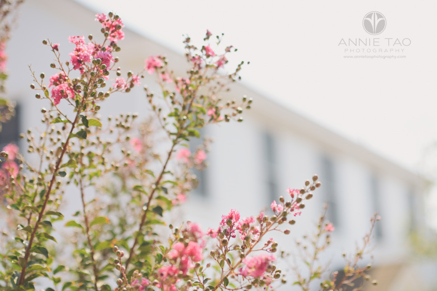 San-Francisco-Bay-Area-education-photography-flowering-tree-in-front-of-school