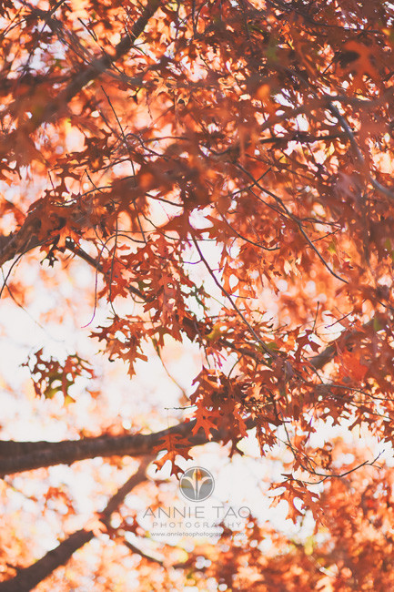 Bay-Area-lifestyle-photography-red-autumn-leaves