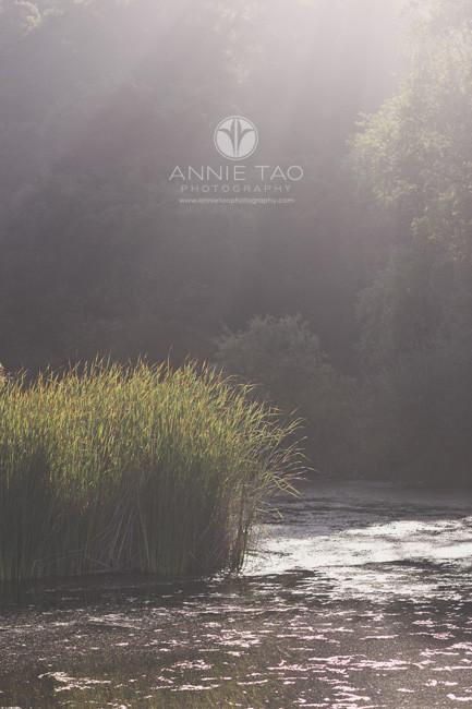 Bay-Area-lifestyle-photography-sunbeams-shining-down-on-lake
