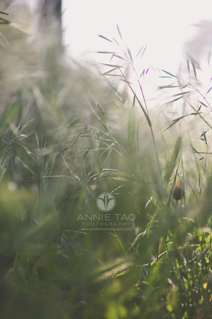 San-Francisco-lifestyle-photography-wispy-green-grass-closeup