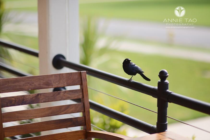 San-Francisco-lifestyle-photography-black-bird-watching-me