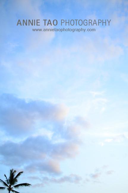 BigIsland_palm-tree-in-sky_bg