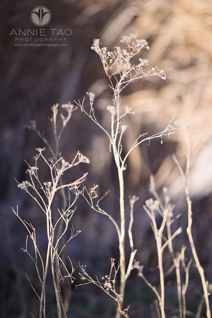 East-Bay-lifestyle-photography-dried-plants-in-nature
