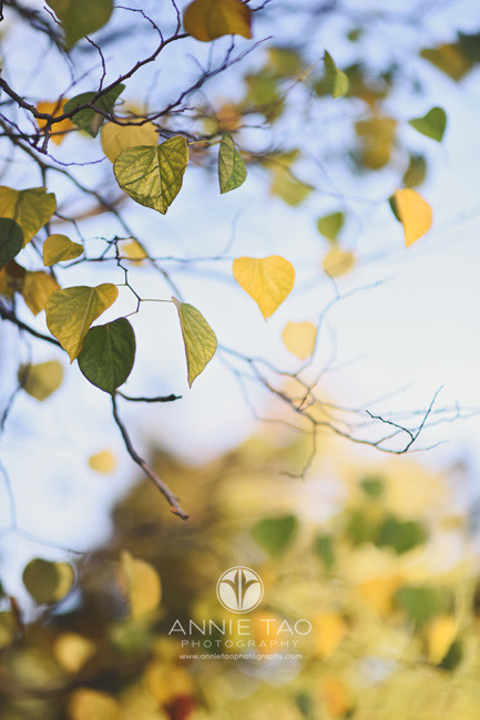 East-Bay-lifestyle-photography-green-and-yellow-leaves