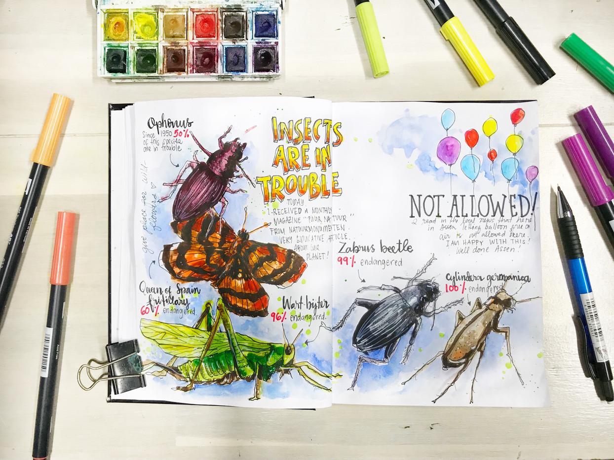 Sketch journal *Nature*