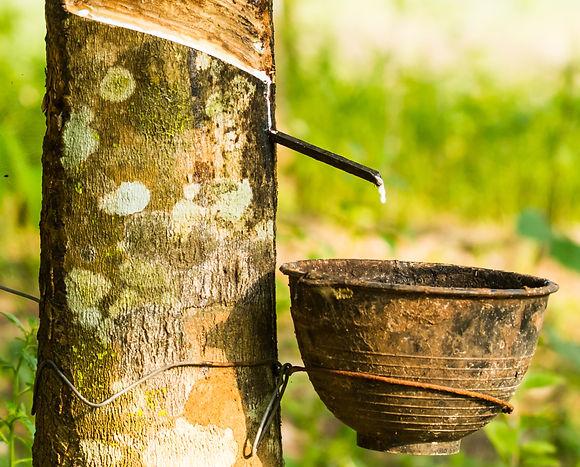 5. 維持生態的延續性-對未來居住環境的責任感.jpg