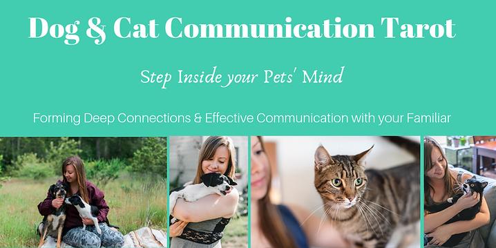 dog & Cat Communication Tarot Step Insid
