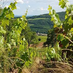 vignes-saint-amour-agape-8