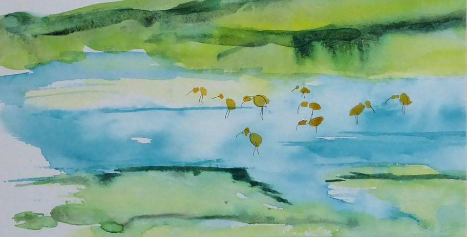Curlews at Kinnaber -  2