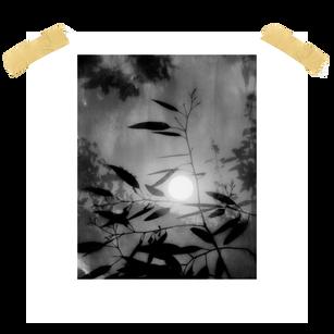 sorrow_bleeds