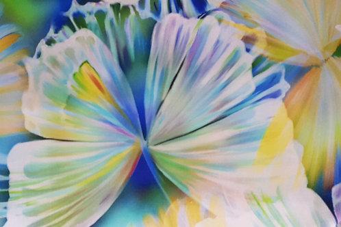 Flutterings mariposa