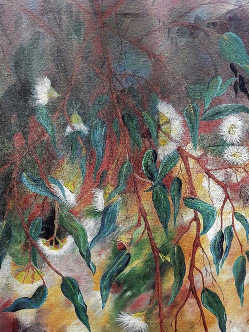 Flowering gum Leaves
