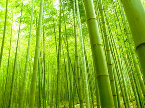 Five Remarkable Facts about Bamboo