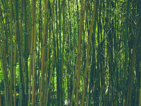 Bamboo can Help Save the Planet