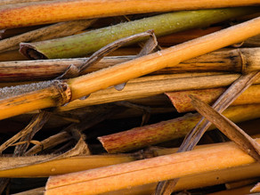 The Bamboo Straw is the Perfect Eco-Warrior