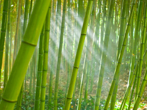 The Value of Bamboo