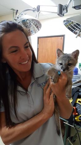 Hollie & Gray Fox kit