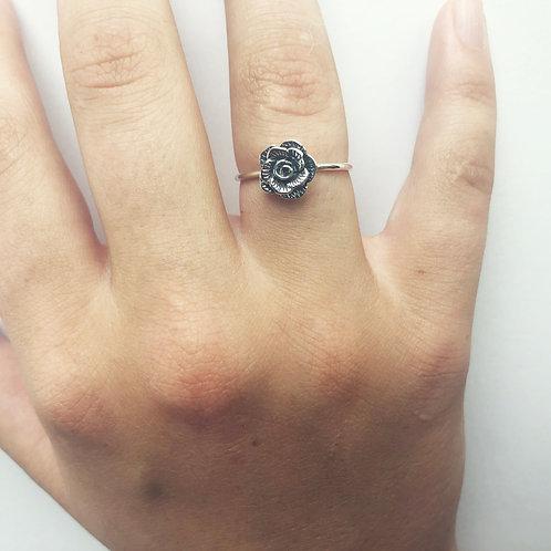 begonia RING