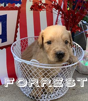Forrest.PNG