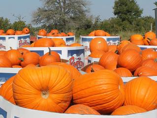 It's Almost Pumpkin Hunt Time