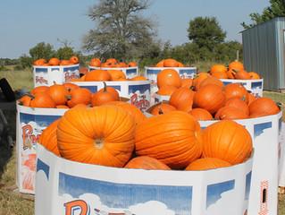 Pumpkin Hunt and Fall Festival
