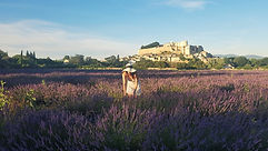visit Provence in a one-day excursion with your French teacher in the lavender fields in Grignan
