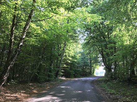 Skånska-Möten_skog.jpg