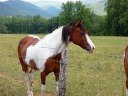 Horse in the Cove