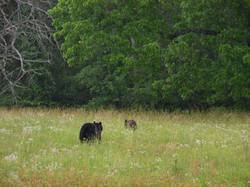 Leaving Bears