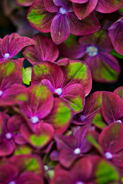 Garden-Flowers_0048