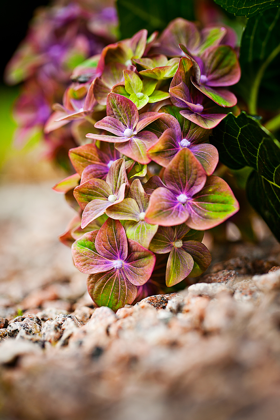 Garden-Flowers_0175