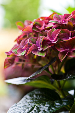 Garden-Flowers_0023