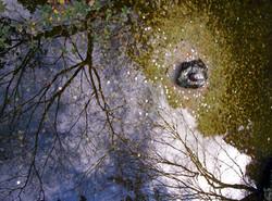 Ginkakuji Wishing Pond