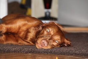Otheopathie/Physiotherapie/Lasertherapie/Ultraschall/HD/Athrose/Kreuzbandriss/Präventiv/OCD/Cauda-equina-Syndrom/Bandscheibenvorfälle/Inkontinenz /Hund/