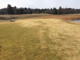 Freeze/Thaw Cycles & Damage to Poa annua