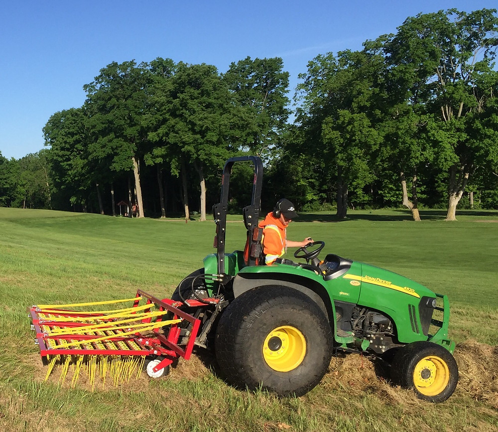 Scarifying Accent Fescue post spring mowing