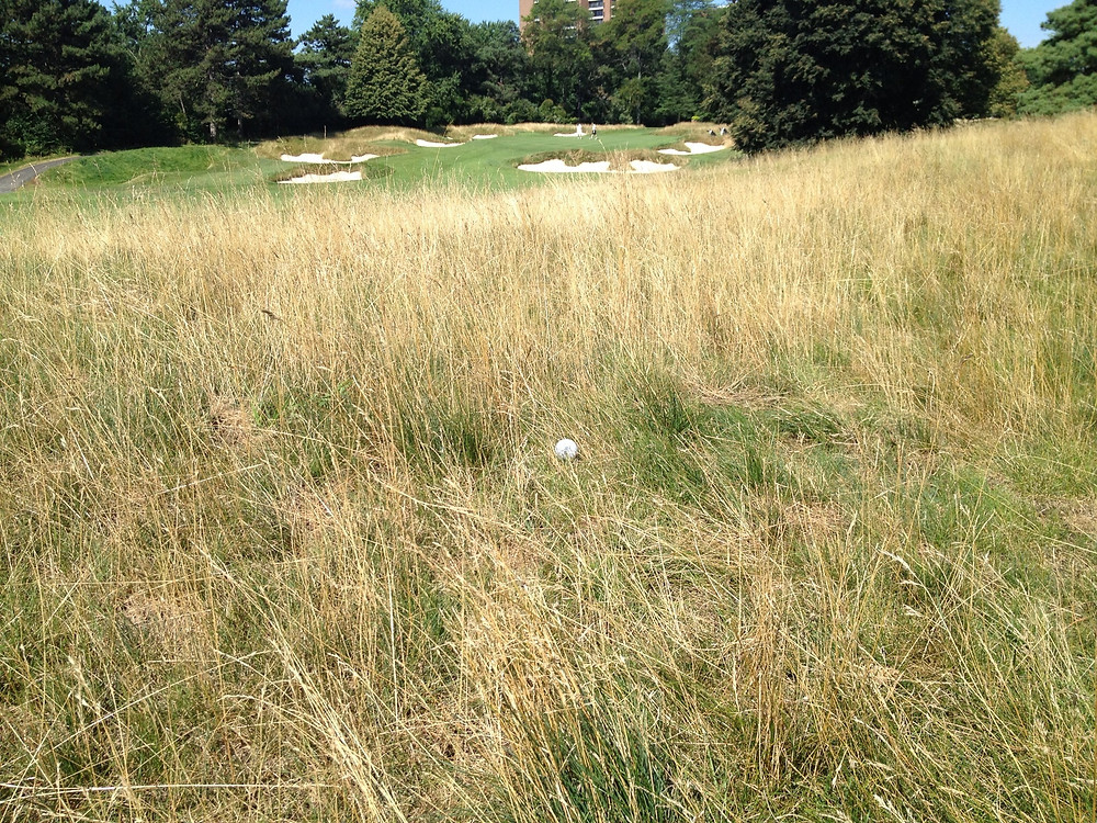 Characteristics of thin and wispy fescue