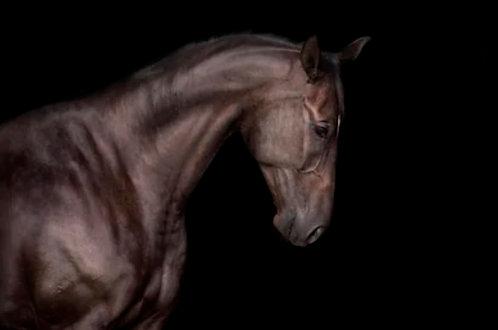 """Картина """"Black horse"""""""