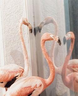 """Печать на холсте """"Фламинго у окна"""""""