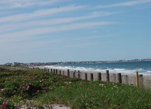 Rosa Rugosa and Duxbury Beach