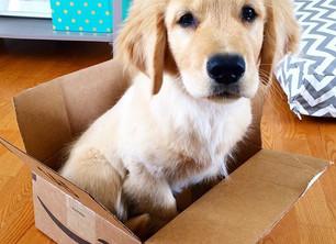 Amazon Puppy