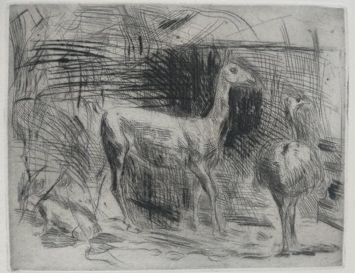Llama and Ostrich - Fritz Wrampe German Original Etchings Animals C. 1930
