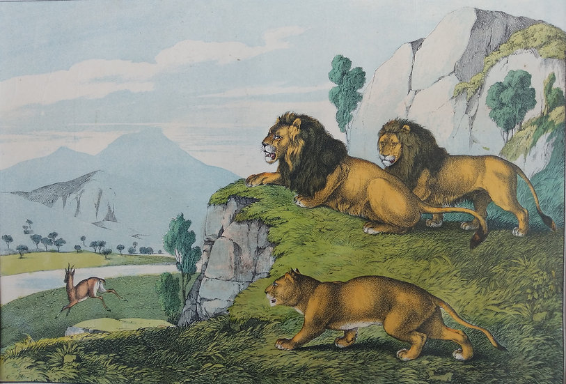 Africa - Printed Hand coloured Lithographs Circa. 1860 Great Britain