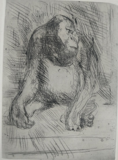 Gorilla - Fritz Wrampe German Original etchings of Animals circa 1930